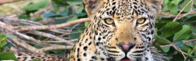 Tansania Camping Safari